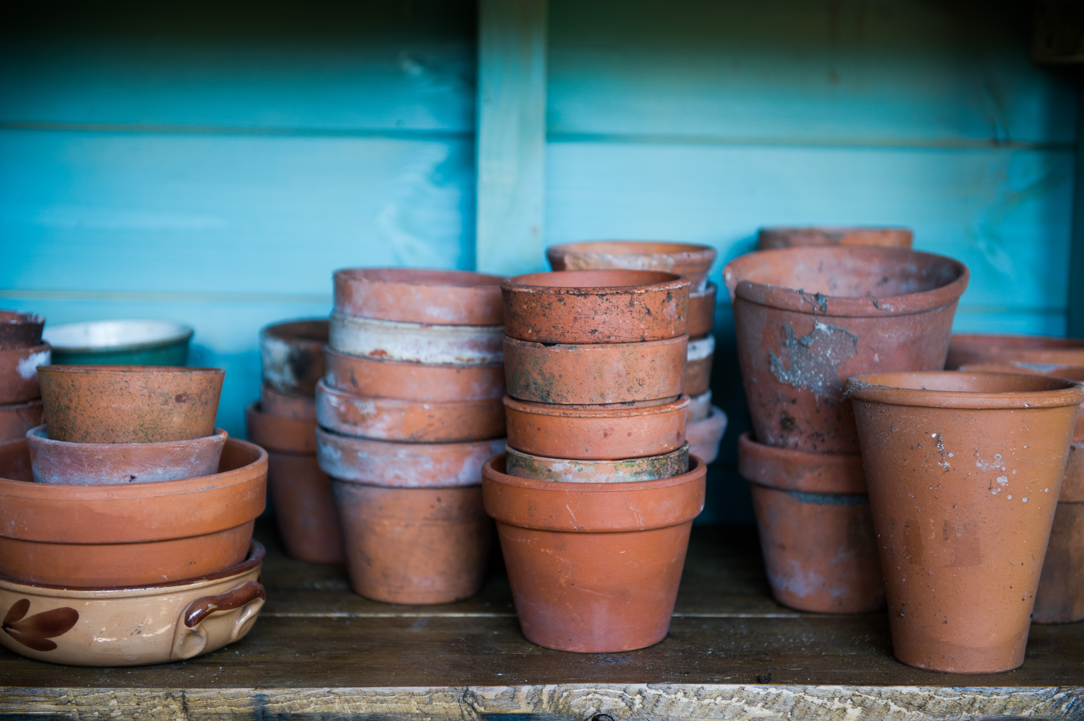 Terracotta pots in a potting shed
