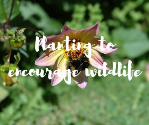 How to encourage more wildlife into your garden - a blog by ITV's Katie Rushworth