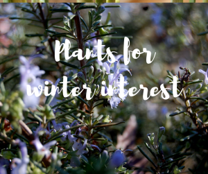 Plants for winter interest: a gardening blog by TV gardener Katie Rushworth