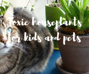 Toxic houseplants for kids and pets: a blog from celebrity gardener Katie Rushworth