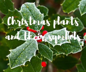 Christmas plants and their sybolism, a unique blog from ITV gardener Katie Rushworth