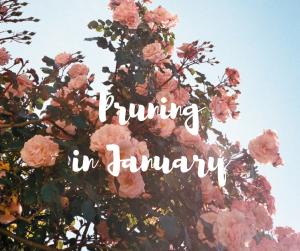Pruning in January, a garden blog by Katie Rushworth. Image credit: GabPRR on Flickr https://www.flickr.com/photos/gabprr/9092200831/in/photolist-eRrUxi-nWG2XG-GZ3pMN-eJthts-6meTqN-eTQFHm-86RrsL-88J2WH-94pZQj-d85CPb-946qk8-nxmVh5-cjhkyU-86Nfxg-4R9my5-4WyDGr-cFmP4Q-qowgiy-cFmMJQ-PmJbK-a44MAn-7SDckg-QRGpE-4krP3k-d85Cjo-qeLwTU-qopQpM-8S6EhR-a2bTaE-bas8QX-cFmPSU-4S6kE4-cFmKA3-8foEfC-cFmNaL-cFmNCy-cFmLq7-oFmurL-oqUa5h-cFmLSL-cFmMhW-fusMxU-oHnUhg-6J1bW7-8VP39K-ivht3-bMca1P-6yoNj5-8EETBU-6wetQx