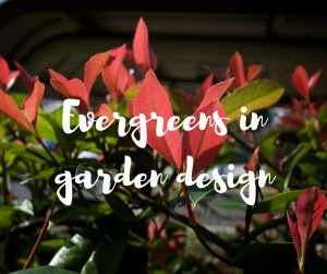 Evergreens in garden design, a blog from celebrity gardener Katie Rushworth
