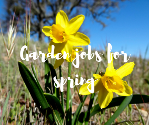Garden jobs for April, a gardening blog from TV gardener Katie Rushworth