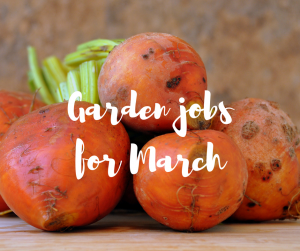 Garden jobs for March, a blog by TV gardener Katie Rushworth