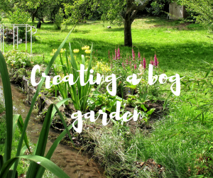 Creating a bog garden, an informative blog from Katie Rushworth