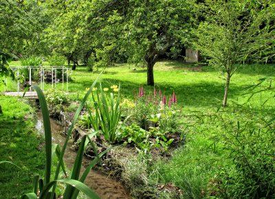 Bog garden tips from Katie Rushworth