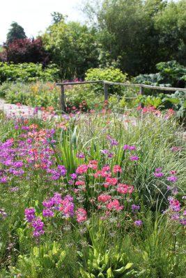 Bog garden flowers and garden design from Katie Rushworth