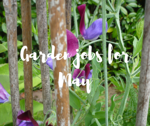 Garden jobs for May, a blog from celebrity gardener Katie Rushworth
