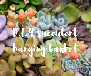Succulent hanging baskets: a garden DIY project from TV gardener Katie Rushworth