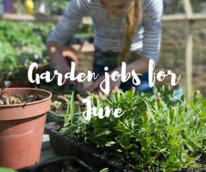 Garden jobs for June, an informative blog from TV gardener Katie Rushworth