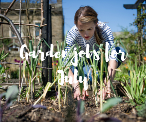Garden jobs for July, an informative blog from tv gardener Katie Rushworth