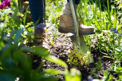 Garden jobs for September: a gardener's blog from Katie Rushworth