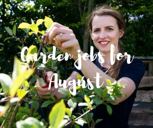 Garden jobs for August, an informative gardening blog from Katie Rushworth