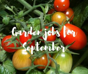 Garden jobs for September, a blog by TV gardener Katie Rushworth