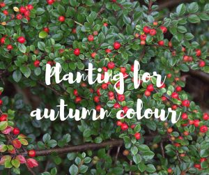 Planting for autumn colour, a gardening blog from Katie Rushworth