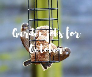 Garden jobs for October, a gardening blog from Katie Rushworth