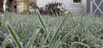 Frosted lawn in February
