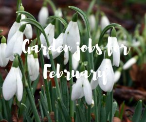 Garden jobs for February: a blog from TV gardener Katie Rushworth