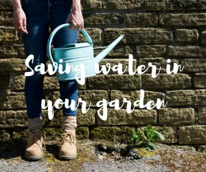 Saving water in your garden - a blog from ITV's Katie Rushworth