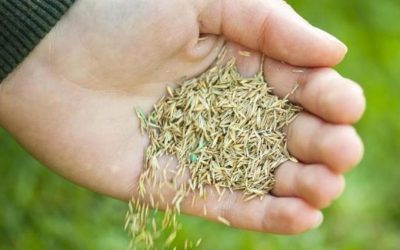 Hand planting grass seeds from https://www.thelawnstore.co.uk/sow-new-lawn-seed/