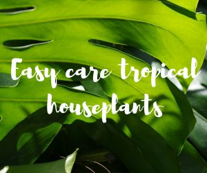 Easy care tropical houseplants, a blog from Katie Rushworth