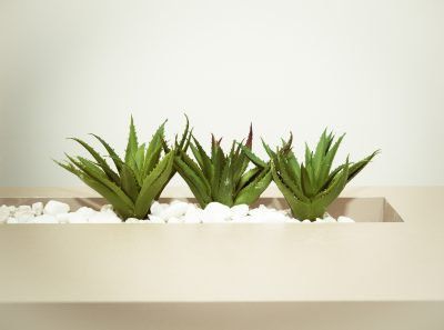 Aloe vera plant by Cecília Tommasini from Pexels
