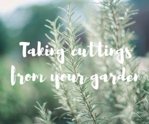 Taking cuttings from your garden: an article from Katie Rushworth