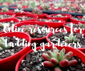 The top online resources for budding gardeners, a blog from Katie Rushworth