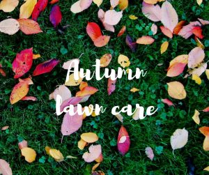 Autumn lawn care: top tips to take care of your lawn in preparation for winter. An informative blog from Katie Rushworth