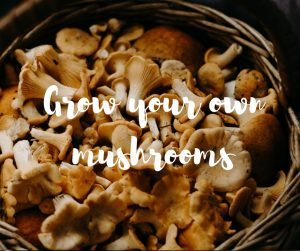 Growing your own mushrooms, an informative article from TV gardener Katie Rushworth