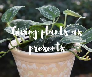 Giving plants as presents: a guide on cost effective gifting by TV gardener Katie Rushworth