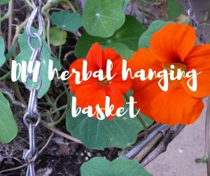 DIY herbal hanging basket: a garden and home do-it-yourself from TV gardener Katie Rushworth.