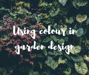 Using colour in garden design, an informative home and garden blog from TV gardener and presenter Katie Rushworth.