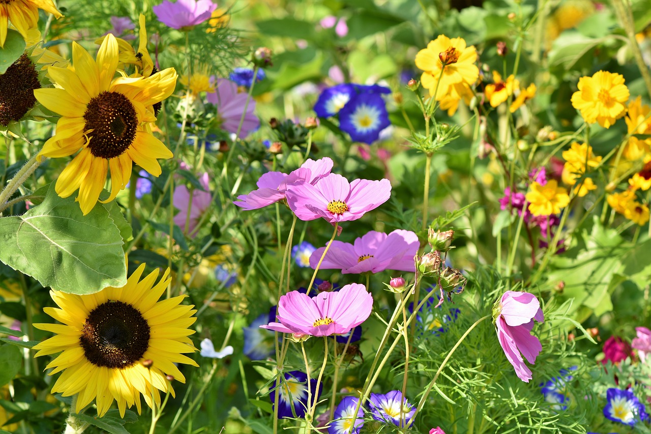 Wildflower meadow shot close up. Use of colour in garden design, an article by Katie Rushworth