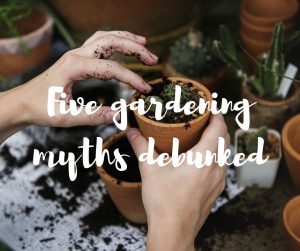 Five gardening myths debunked: an article from Katie Rushworth