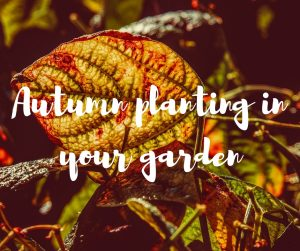 Autumn planting in your garden: an informative gardening blog from TV gardener Katie Rushworth