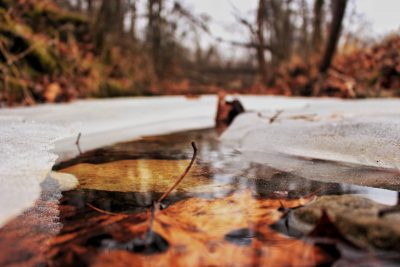 Fallen leaves on a frozen winter pond