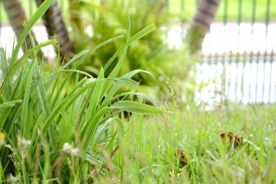 Close up of grass lawn Katie Rushworth