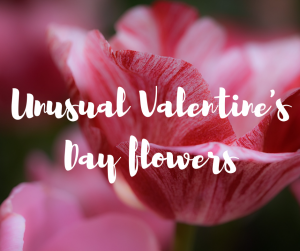 Unusual Valentine's Day flowers, a blog from Katie Rushworth