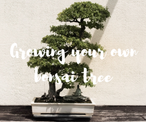 Growing your own bonsai tree, an easy to follow tutorial from Katie Rushworth