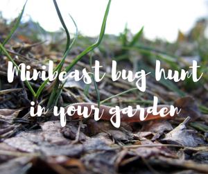 Minibeast bug hunt in your garden by Katie Rushworth