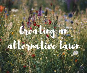 Creating an alternative lawn