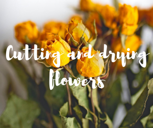 How to cut and dry flowers by Katie Rushworth